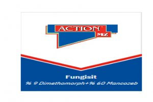 Action M2 - Fungusit